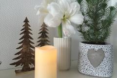 Smuk amaryllis
